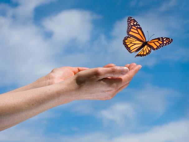 reiki-butterfly-release